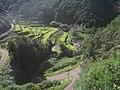 El Cedro - panoramio (1).jpg