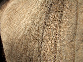 Skin - Skin of an elephant