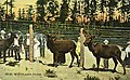 Elk enclosure at Woodland Park, 1911 (SEATTLE 2028).jpg