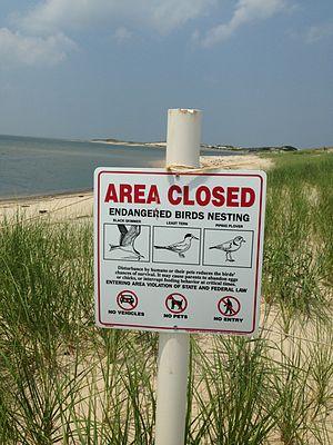 Cape Henlopen State Park - Area in Cape Henlopen State Park where endangered birds nest.