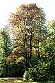 Englischer Garten Herbst-16.jpg