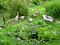 Enten und Gänse als Gartenhelfer.jpg