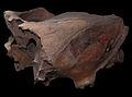Equus skull (15532396724).jpg