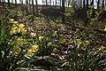 Everbeekse bossen 75.jpg