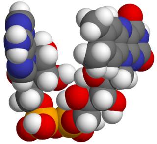 Flavin adenine dinucleotide Redox-active coenzyme