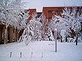Facultad de Económicas - UCLM - Día de Nieve - panoramio.jpg
