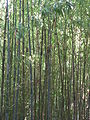 Fale - Giardini Botanici Hanbury in Ventimiglia - 686.jpg