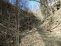 Fall Run Park in Shaler Township, late winter - 26.jpeg