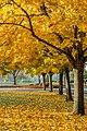 Fall foliage (39094477021).jpg