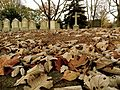 Fall in Mount Auburn Cemetery, Cambridge, Massachusetts.JPG