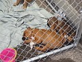 Fence Factory Pet Adoptions - panoramio.jpg