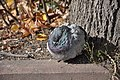 Feral pigeon in Zelenograd 04.jpg