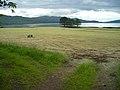 Field Near Savary - geograph.org.uk - 506326.jpg