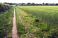 Field edge footpath near Dunham Town - geograph.org.uk - 447489.jpg