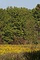 Fields of Blacklick Woods 1.jpg