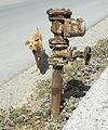 Fire hydrant dog Crete.jpg