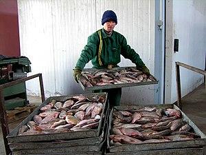 Aral, Kazakhstan - Fish factory in Aral