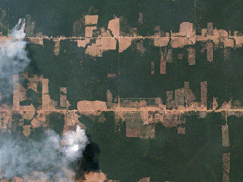 File:Fishbone Deforestation, Rondônia, Brazil by Planet Labs.jpg