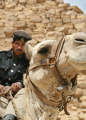 Egyptian National Police - Mounted soldier of the Tourism and Antiquities Police at the Bent Pyramid in Cairo