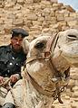 Flickr - DavidDennisPhotos.com - Policeman on Camel at Bent Pyramid.jpg