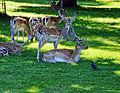 Flickr - Duncan~ - Bushy Park (2).jpg
