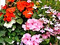 Flickr - ronsaunders47 - SUMMER BLOOMS. 3.jpg
