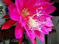 Flor - Belo Horizonte MG.jpg