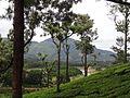 Flora in Kerala 09.jpg
