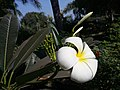 Flower221.jpg