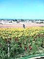 Flower feld 30.jpg