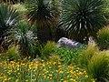 Flowers Cactus (39584764).jpeg