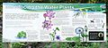 Fogg Dam signs - Woodlands to Waterlilies Walk - Introducing the Water Plants (2).jpg