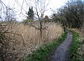 Footpath around the reed beds - geograph.org.uk - 745047.jpg