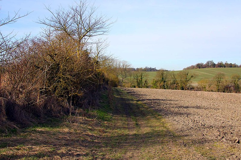 File:Footpath by the hedgerow - geograph.org.uk - 1761195.jpg