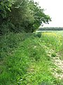 Footpath from Surlingham to Rockland St Mary - geograph.org.uk - 1341832.jpg