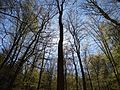 Forêt Weiltal.jpg