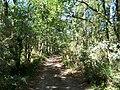 Forêt de la Coubre 015.jpg
