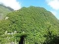 Forêt domaniale de Takamaka - panoramio.jpg