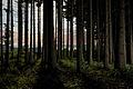 Forêt en Alsace.jpg