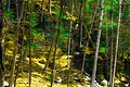 Forest Escarpment Color Enhancement DCEN-10.jpg