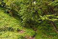 Forest Park, Portland, Oregon (24012149446).jpg