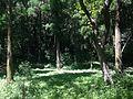 Forest in Miyajidake Shrine.JPG