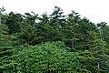 Forest in Yatsugatake 10.jpg