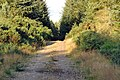 Forest road in Assich Forest - geograph.org.uk - 946559.jpg