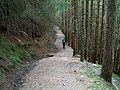 Forest walk - geograph.org.uk - 49701.jpg