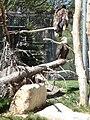 ForestryFarmBaldEagles.jpg