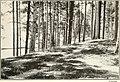 Forestry and community development (1918) (14759524826).jpg