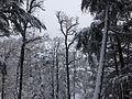Foret des Cèdres Parc National de Theniet el Had (El-Meddad) 19.JPG