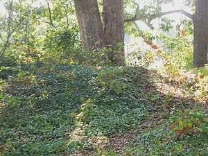 Fort Ethan Allen (Arlington, Virginia) - A section of the earthworks that remain.