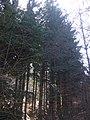 Fosso della Tavola - panoramio.jpg